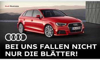 Foto des Serviceangebots Anzeige: Audi Business - bei uns fallen nicht nur die Blätter!