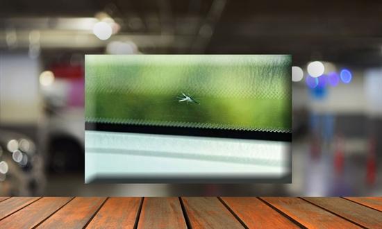 Bild des Serviceangebots Steinschlag – was nun? Wir sorgen für beste Sicht.